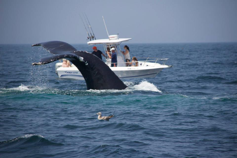 Whale watches. Shark tours. Fishing charters.   experience cape cod by boat    Book Your Trip
