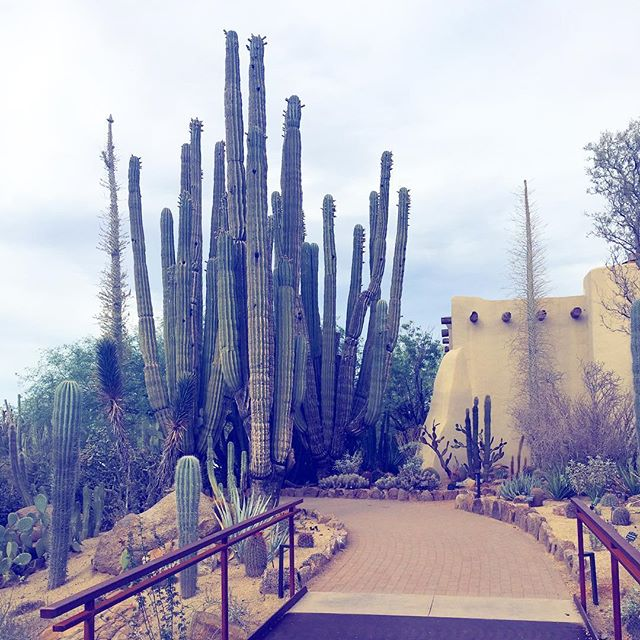 Spent an inspiring week in #phoenix 🌵getting ideas for my next marketing campaign.