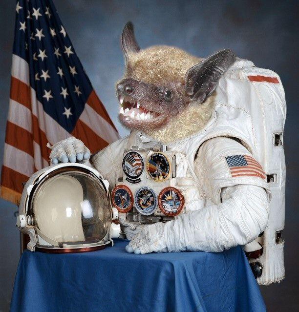 space bat meme.jpg