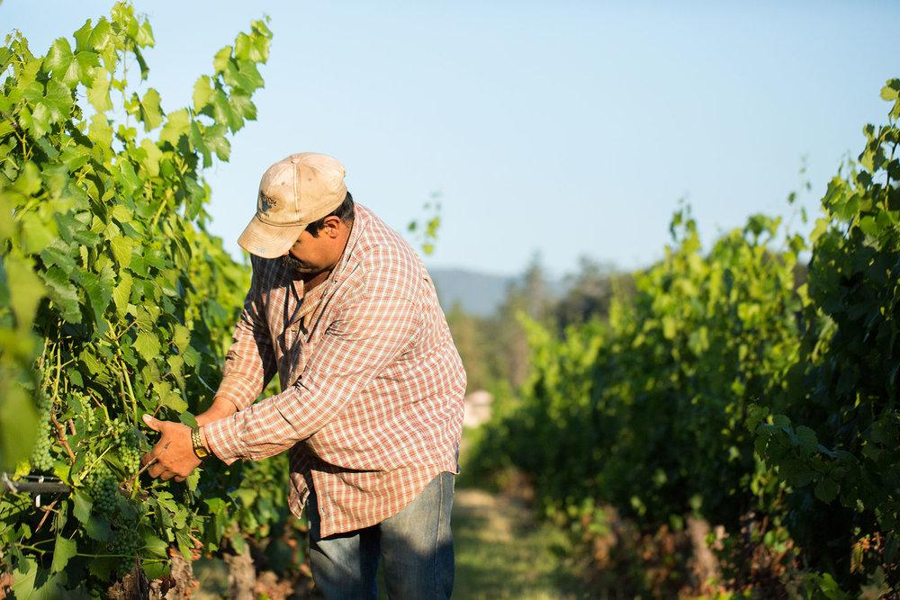 Bridgeview-Winery---Counterform-----00989.jpg