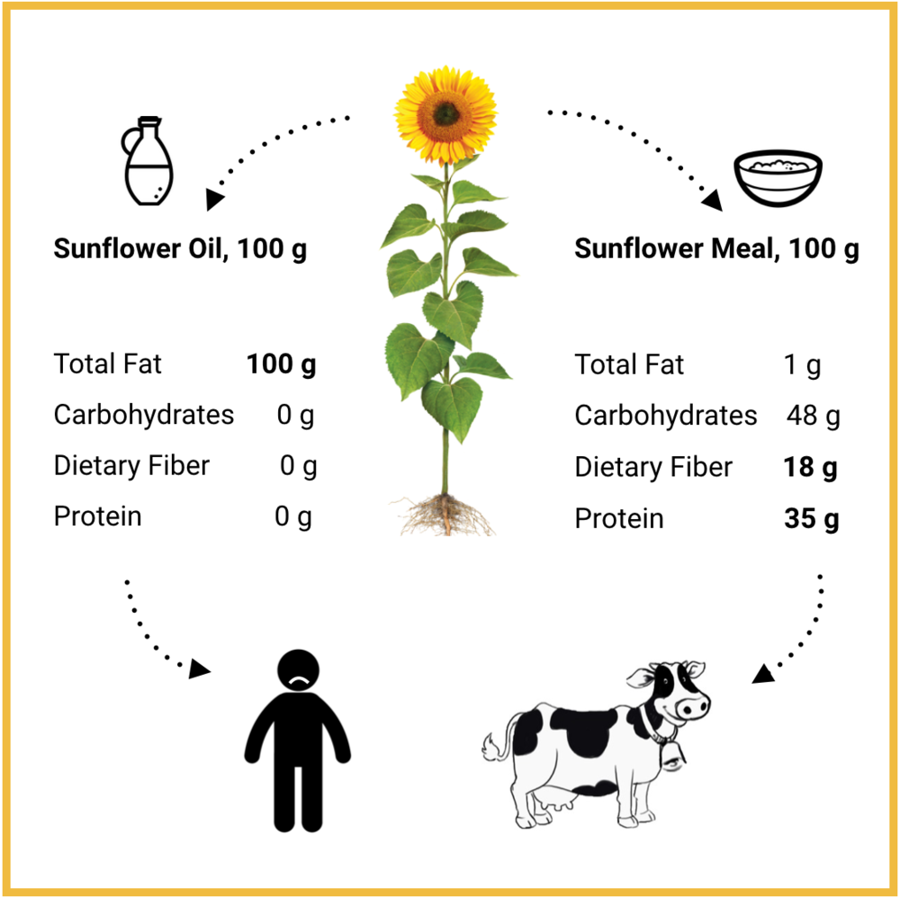 Source: USDA Nutrient Database, National Sunflower Association, PLANETARIANS