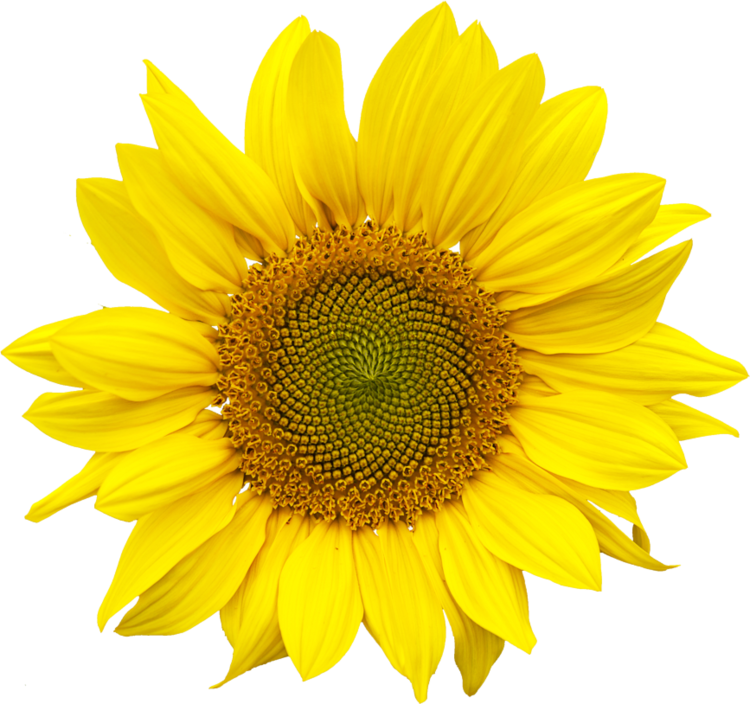 ALL NATURAL - PLANETARIANS made from Sunflower Meal, what's left after oil extraction from seeds.Sunflower Meal contains 35% high-quality protein with all essential amino acids. Sunflower was never genetically modified (NON-GMO) and is Gluten Free.