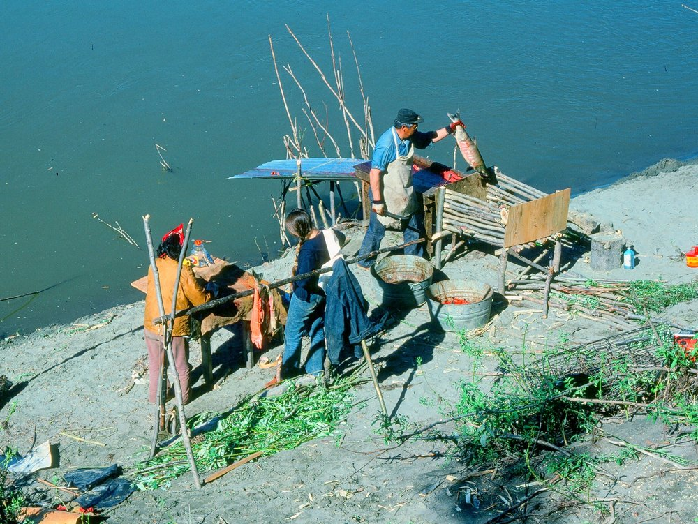 A Koyukon Indian family cutting chum salmon beside the Koyukuk River in interior Alaska.