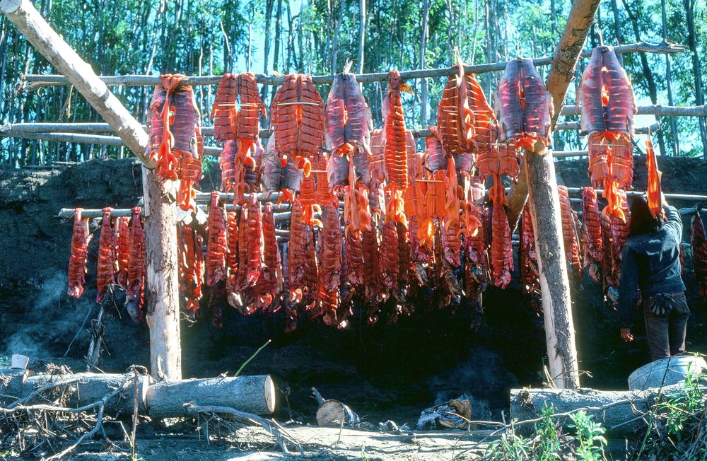 Salmon drying on rack in a Koyukon Indian fish camp.