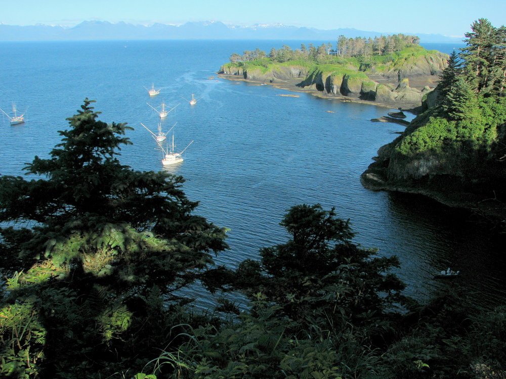 Commercial salmon trollers anchored in the sheltered lee of an island in southeast Alaska, where salmon populations are still healthy.
