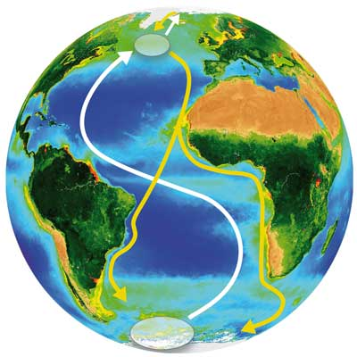 Arctic Tern Migration Paths, Greenland Institute of Natural Resources