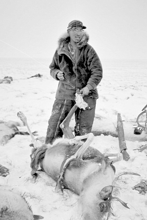 Inupiaq hunter, Glen Shoudla, carefully removing caribou leg skin used for making traditional boots or mittens (1964 photo).