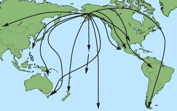 Bird Migration Summary - Encounters