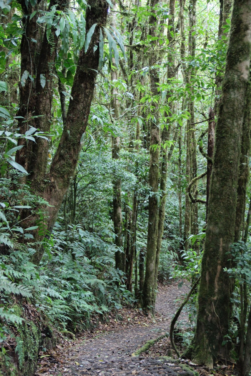 The long and winding path we followed to explore the Monte Verde rain forestfrom the floor
