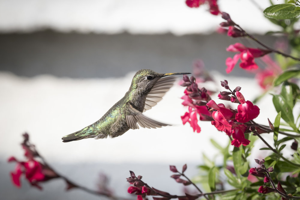 Hummingbird by Deb Ford.jpg