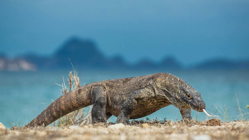 The Komodo Islands - March to September