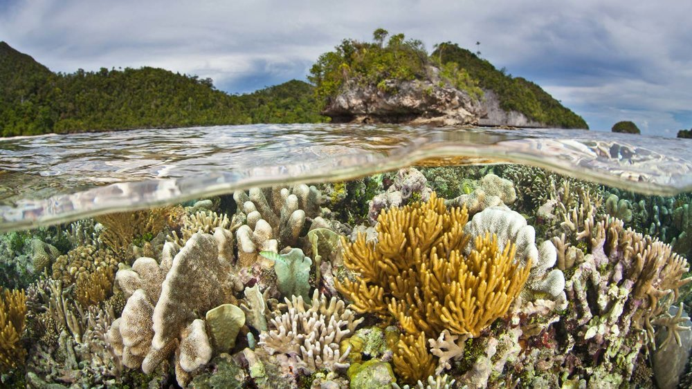 Papua & Raja Ampat - November to March
