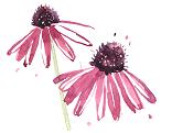 leftflower.png