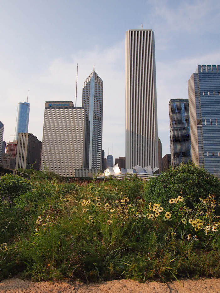Chicago skyline from Millennium Park. Love the contrast of man and nature!