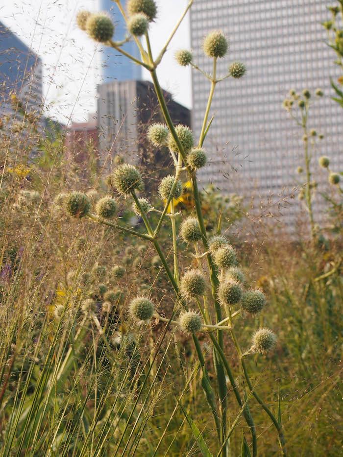 Chicago Travel Guide: Millennium Park