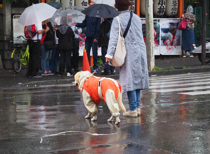 The dogs were more prepared for the rain than I was.