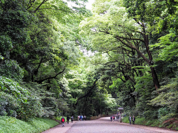 The pathway to Meji shrine….those trees.