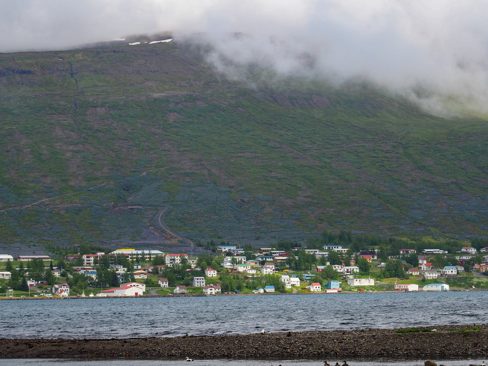 The cutest little fjord town surrounded by purple wildflower covered mountains