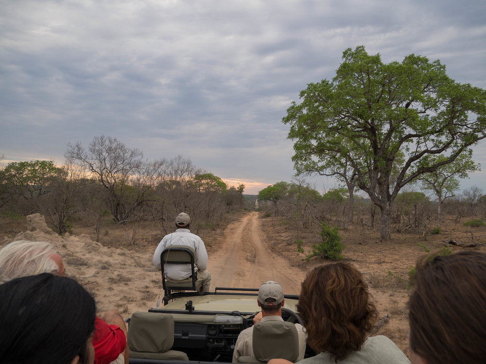 South African Safari in Sabi Sands Reserve