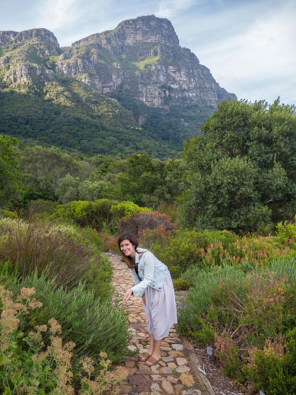 Kirstenbosch Garden Cape Town