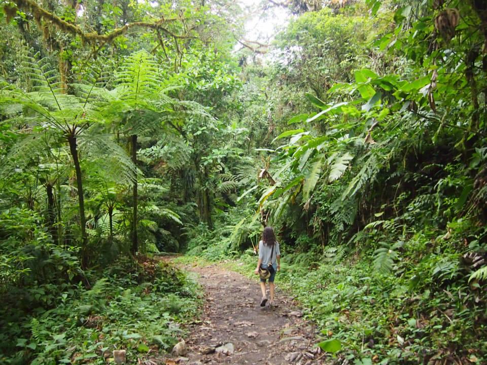 Costa Rica Travel Guide monteverde