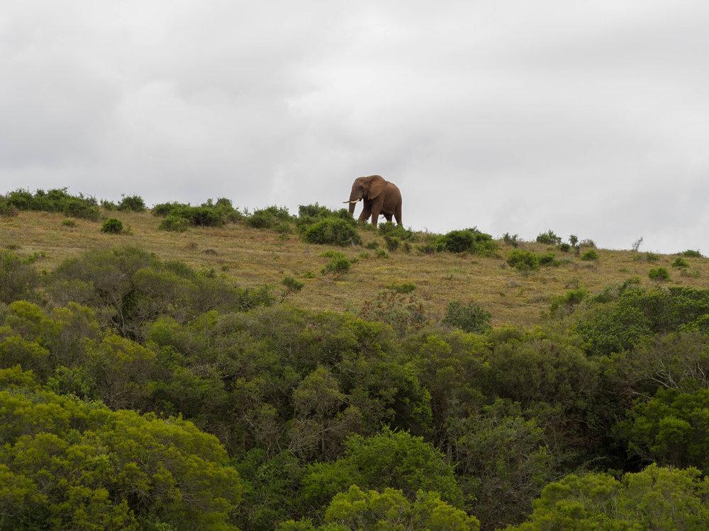 South Africa Travel Guide: Addo Elephant Park