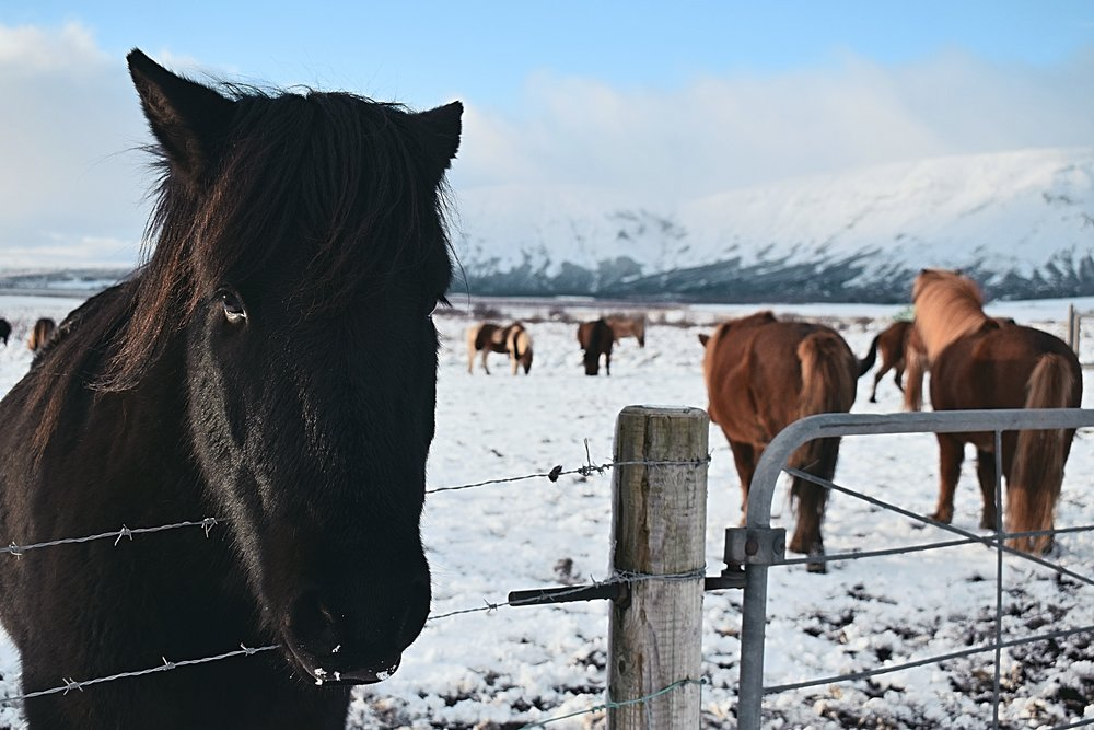 KANO Travel & Trip | Iceland
