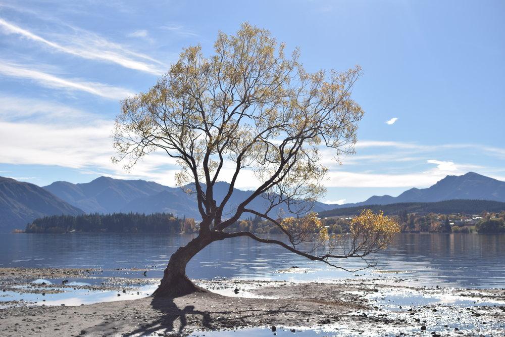 KANO Travel & Trip to That Wanaka Tree| New Zealand