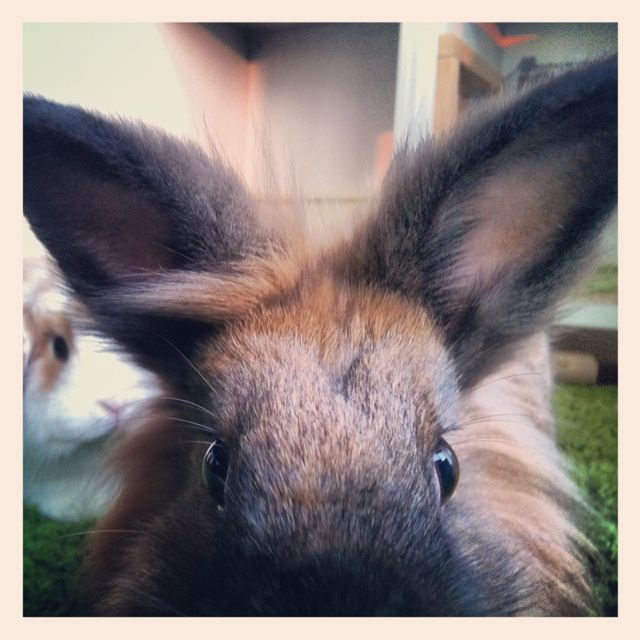 Bunny Gets in Close for Her Photo