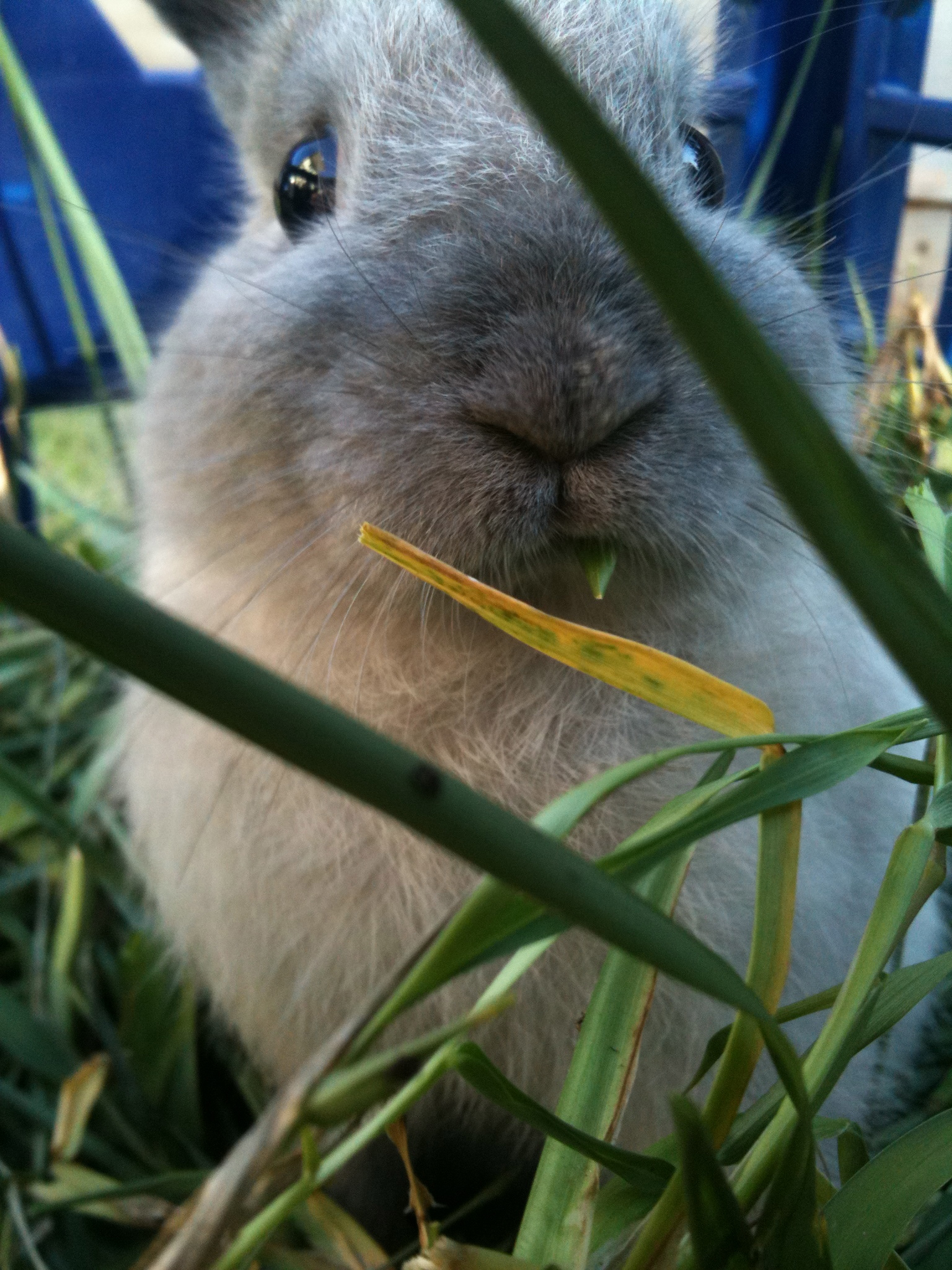 Bunny, You Have a Blade of Grass in Your Teeth