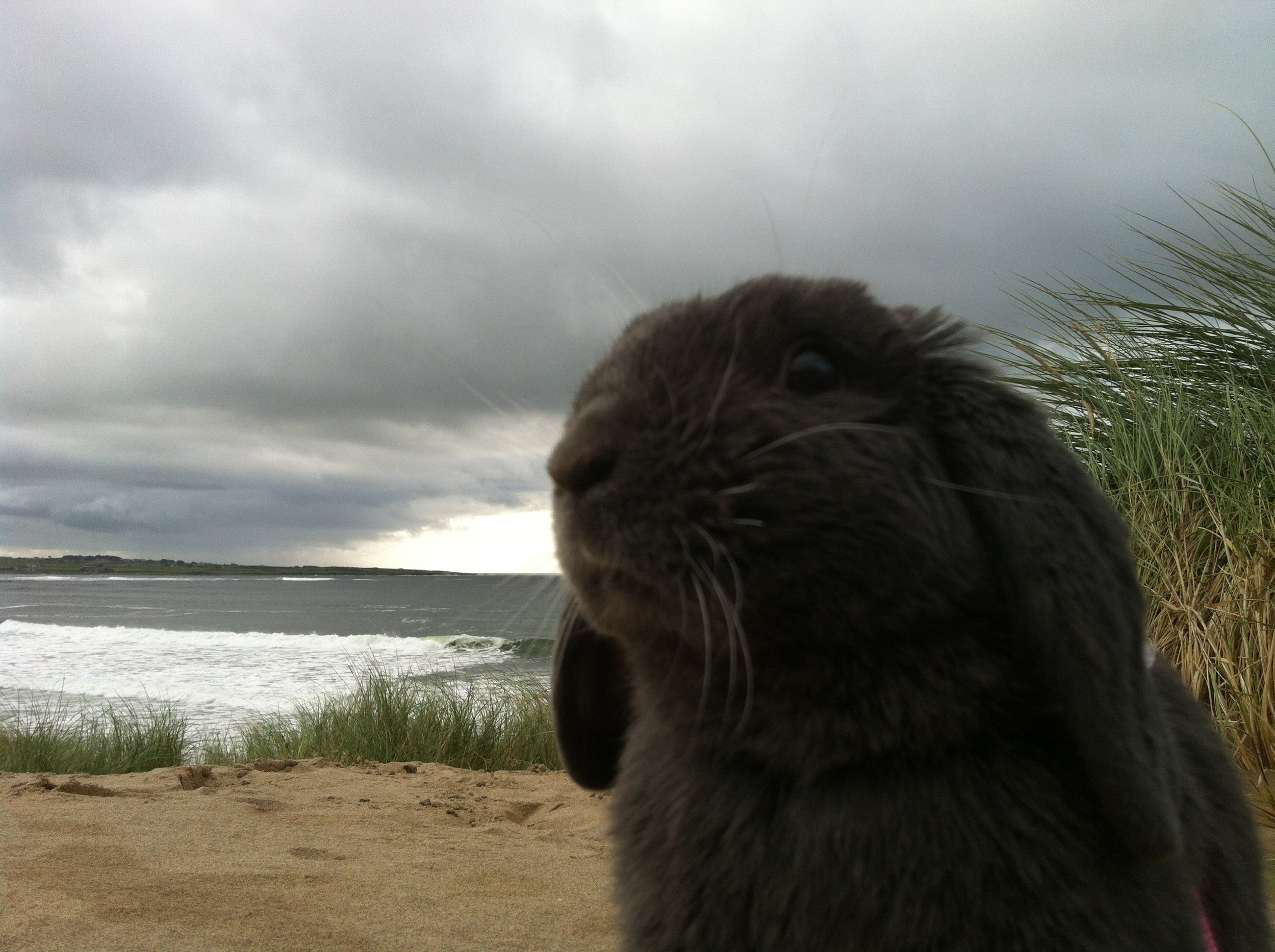 Bunny Sniffs the Cool Sea Air
