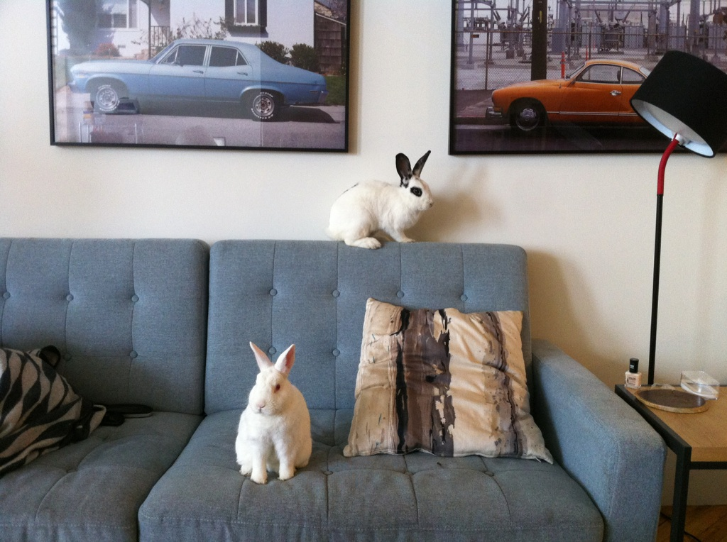 The Sofa Is Overrun with Bunnies!