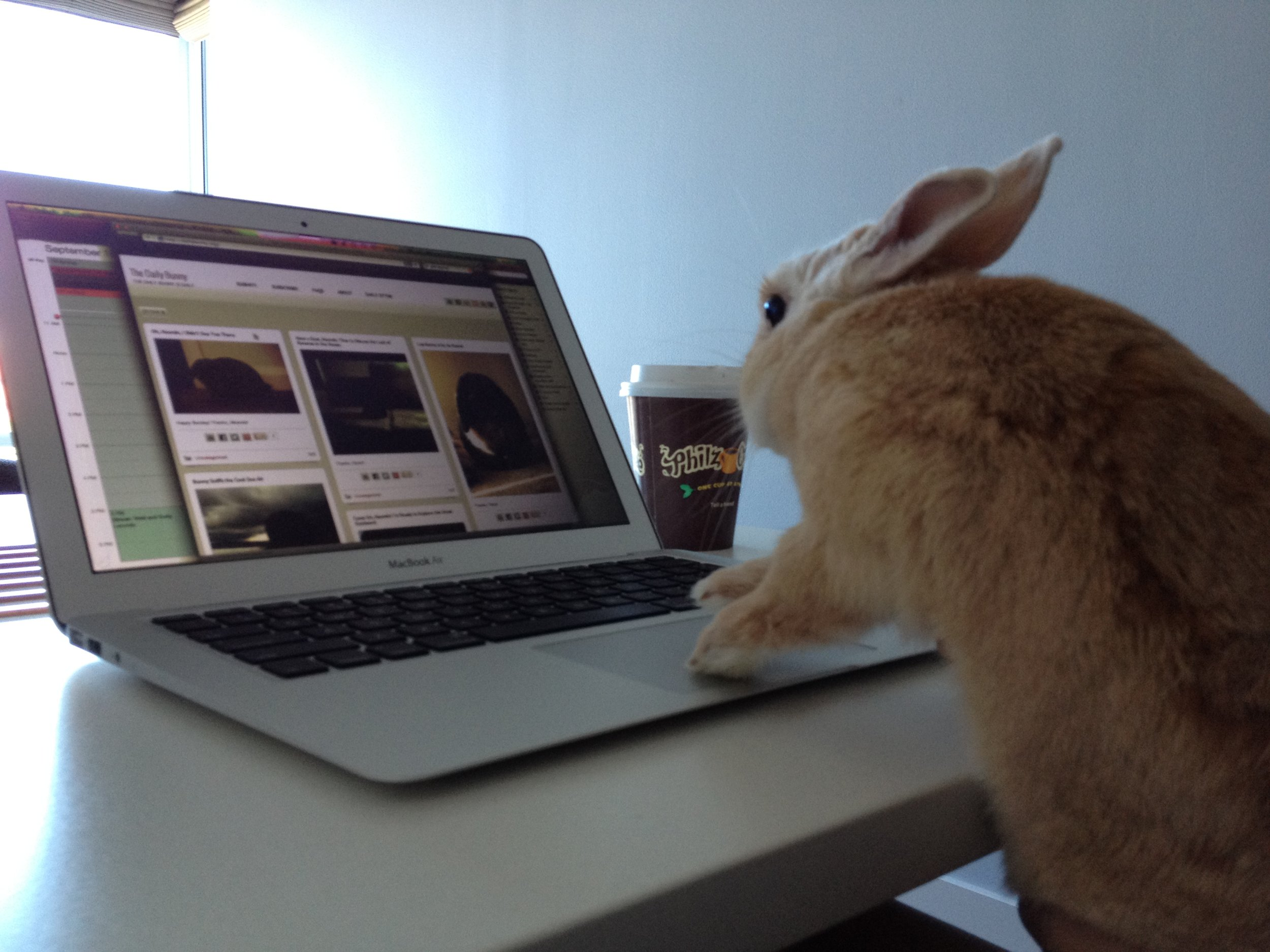 Bunny Peruses the Photos on Daily Bunny