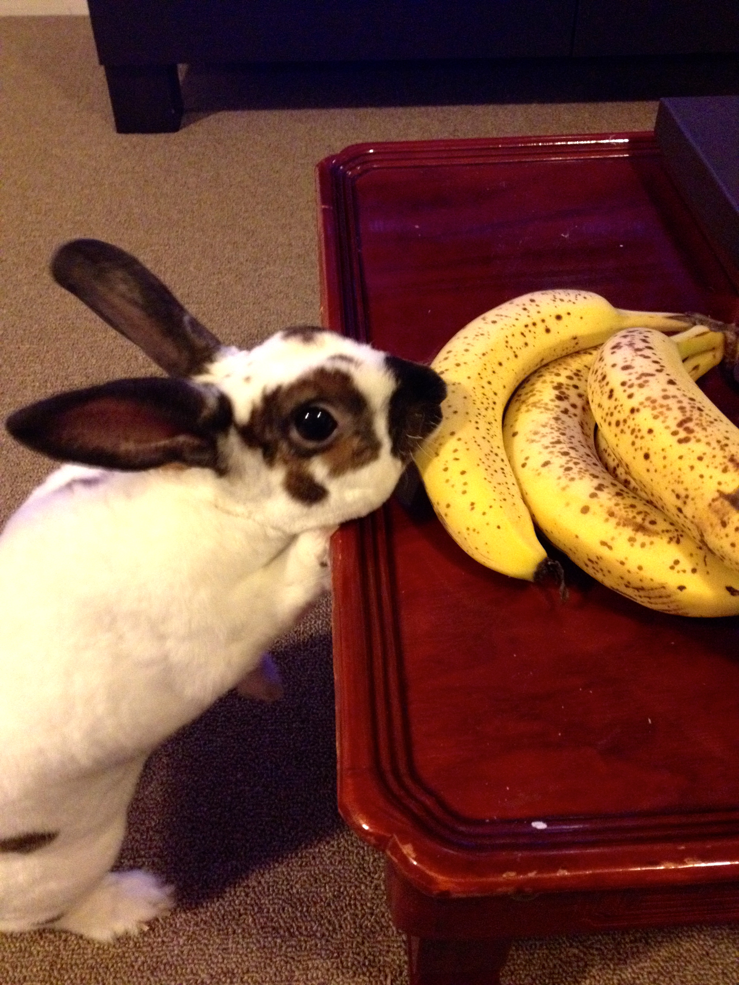 The Infamous Banana Thief Is Caught in the Act!