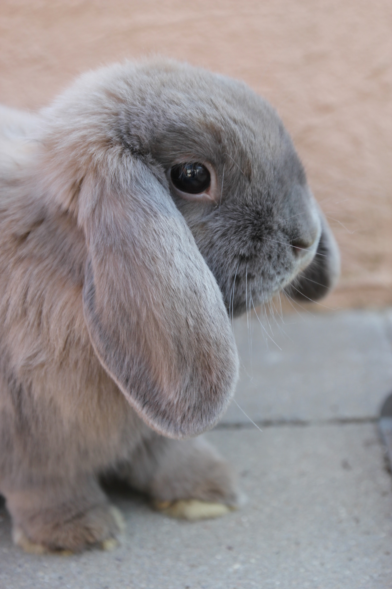Bunny Is Curious About Something