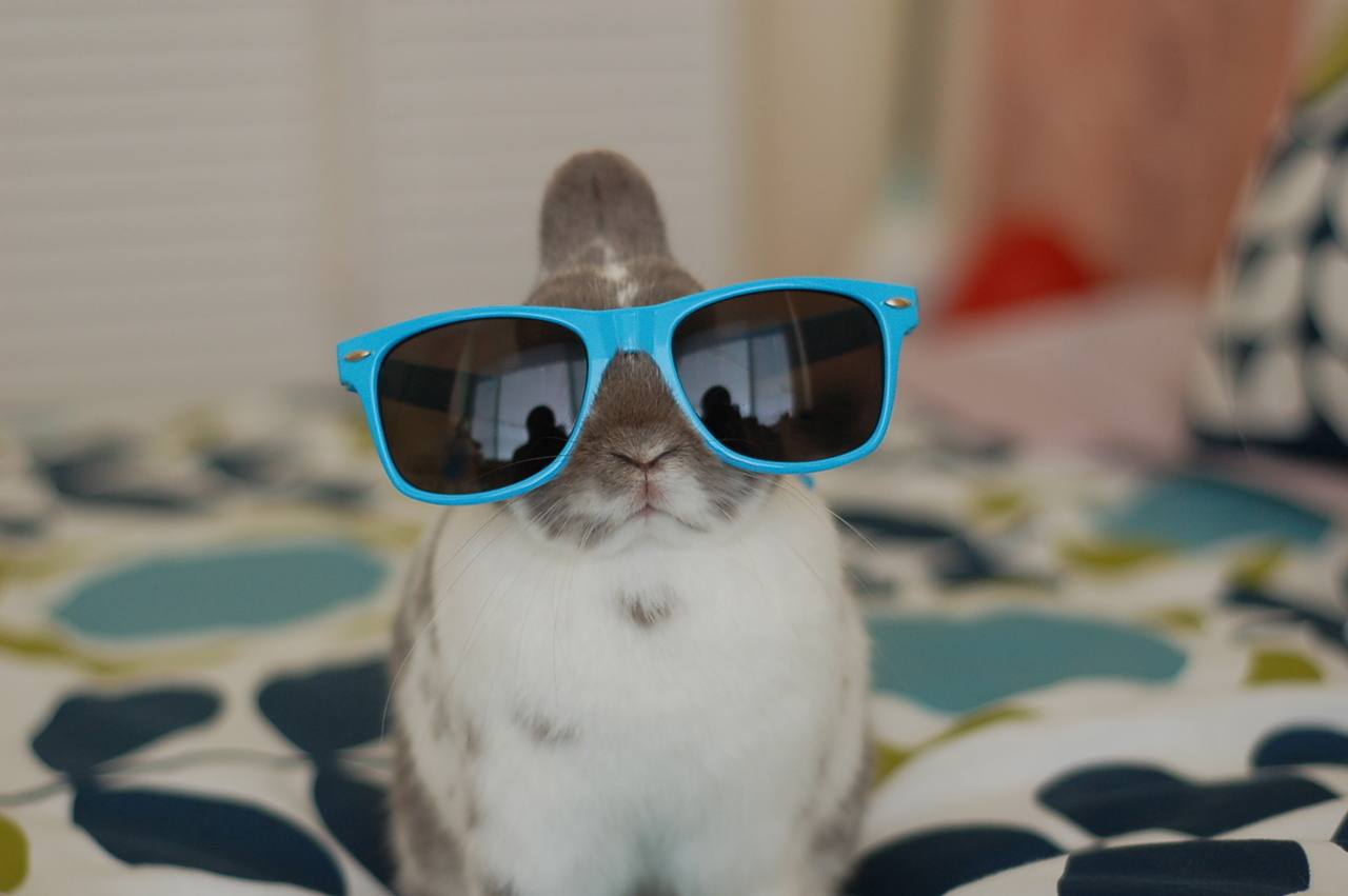 Hipster Bunnies Have Some New Shades 1