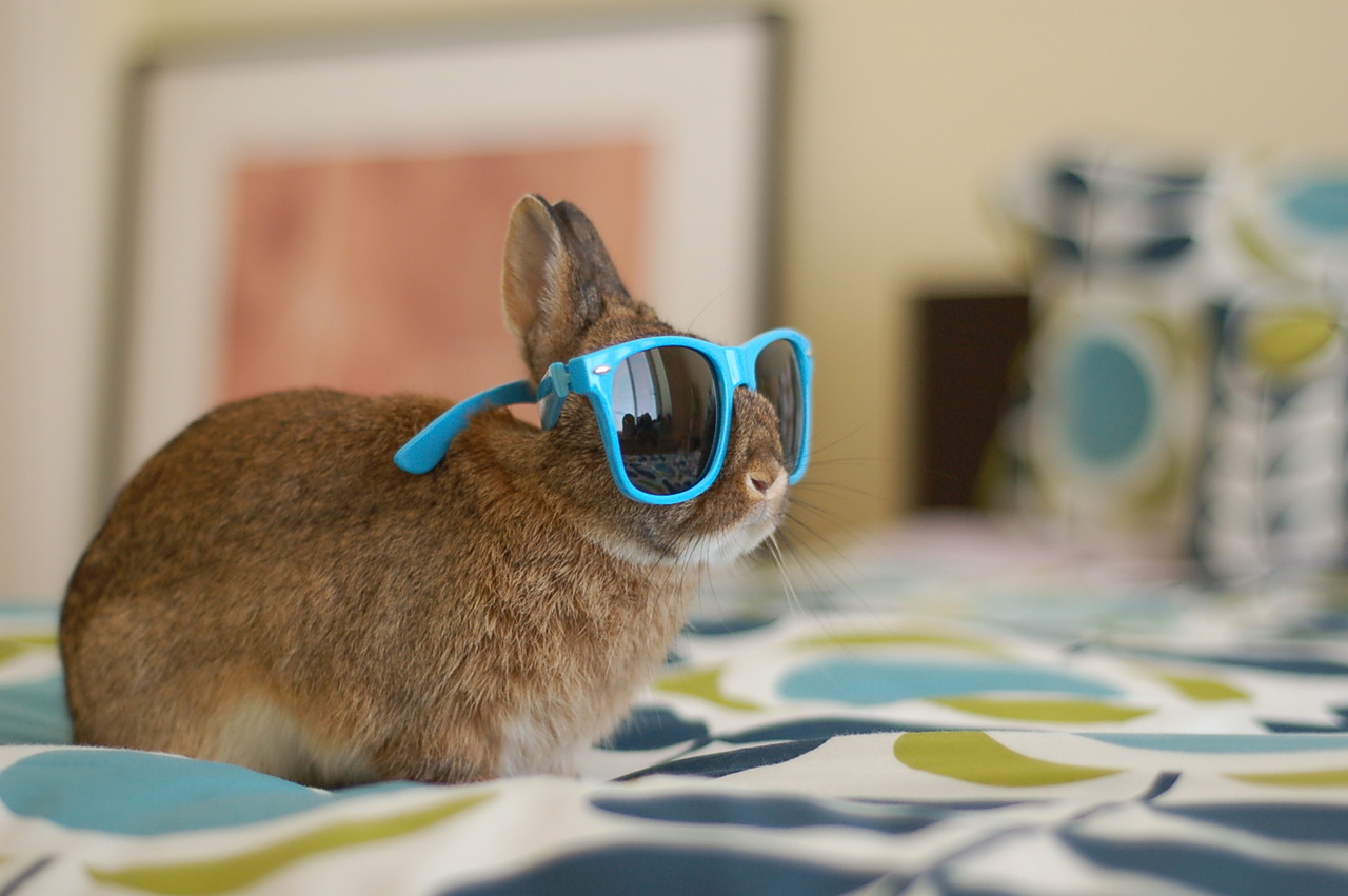 Hipster Bunnies Have Some New Shades 2