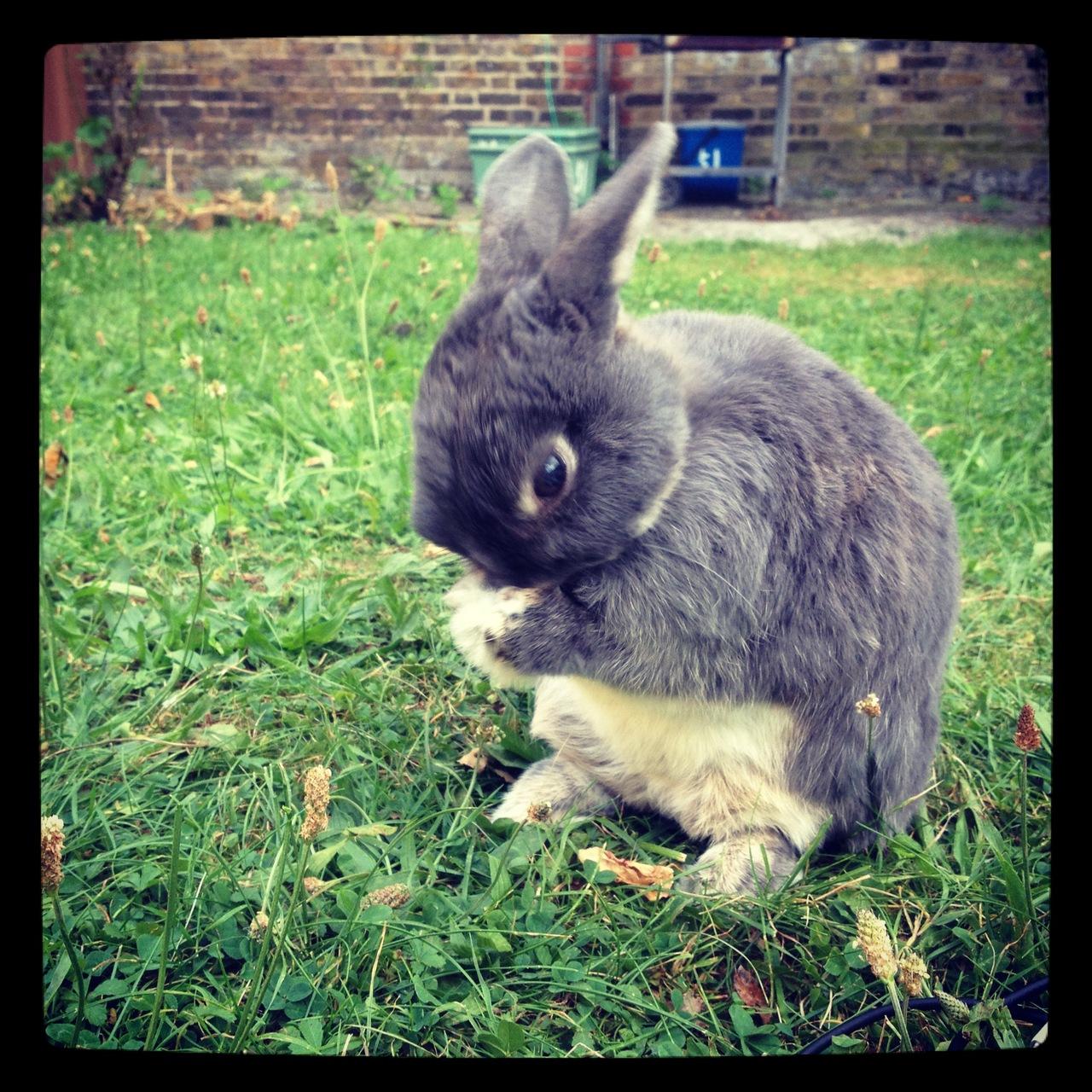 Bunny Has a Face Wash in the Garden