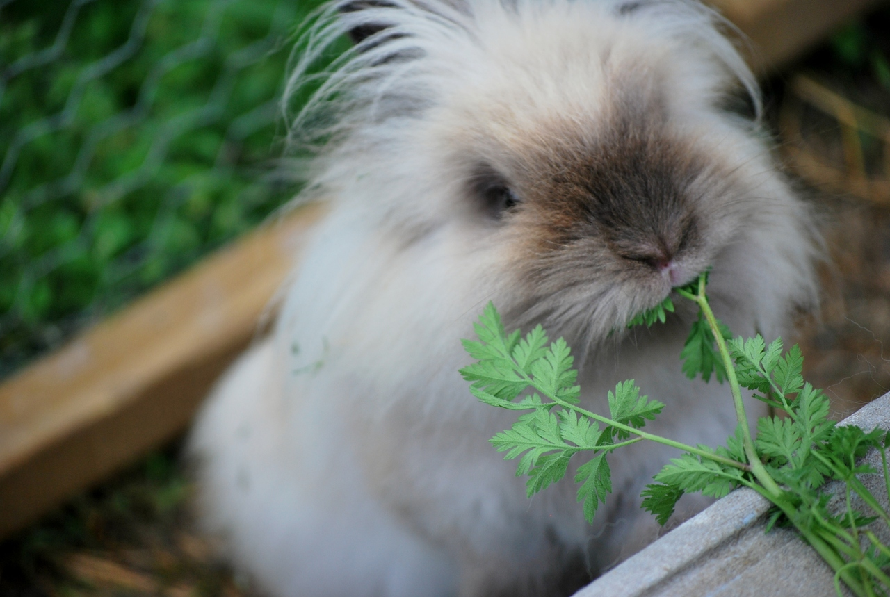 Bunny Has a Bite to Eat