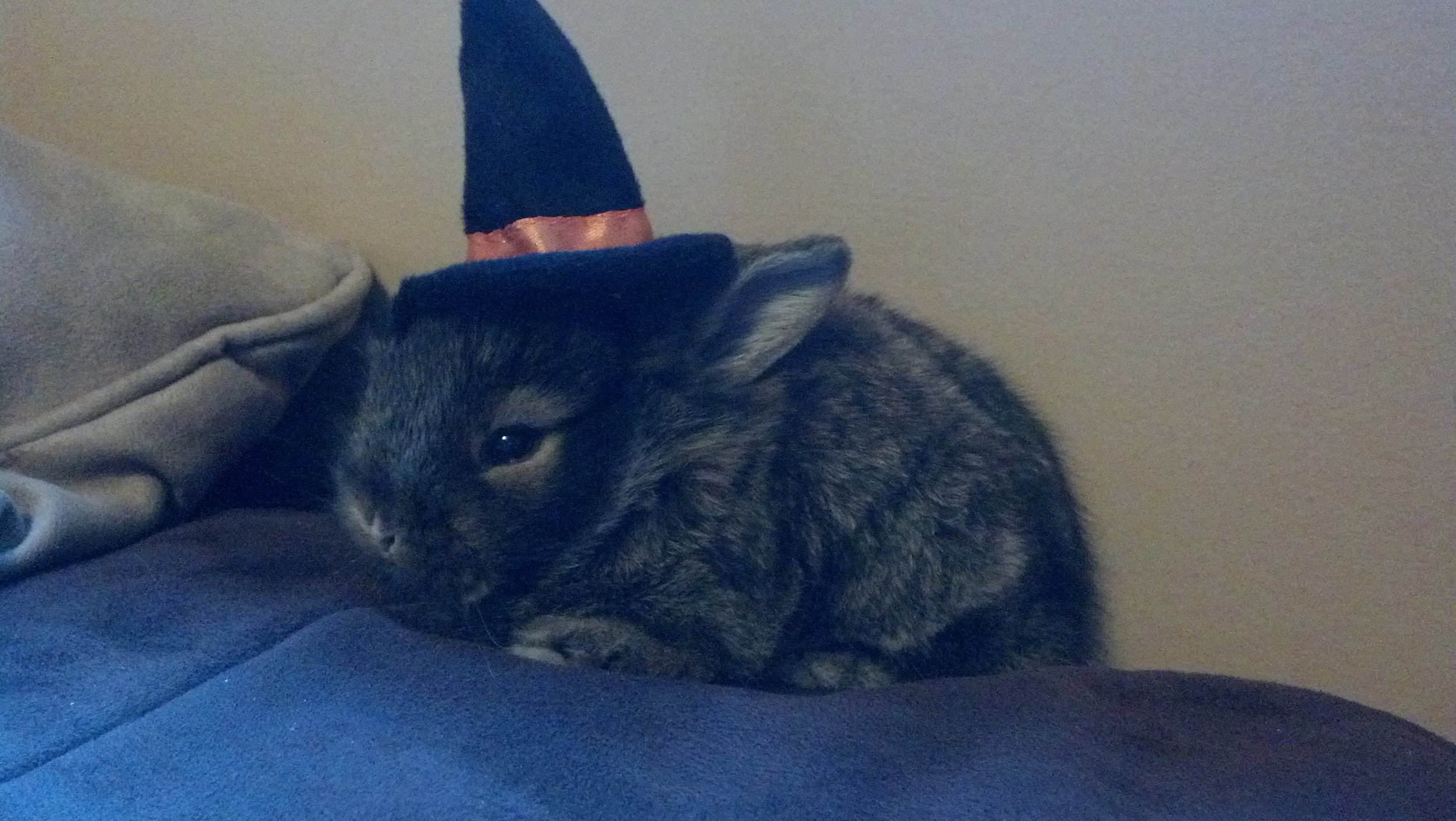 Baby Bunny's First Halloween 2