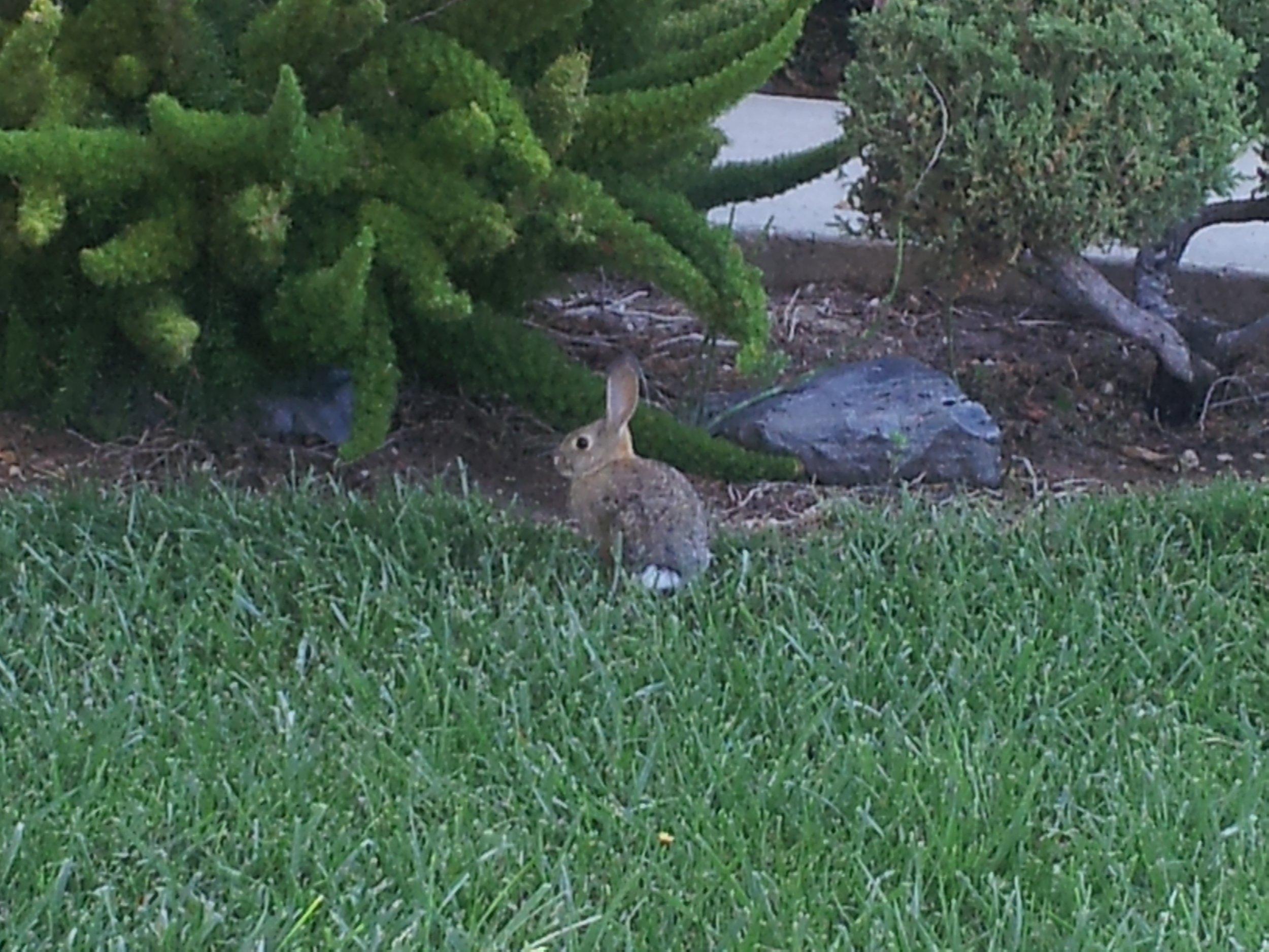 Wild Bunny Post 4
