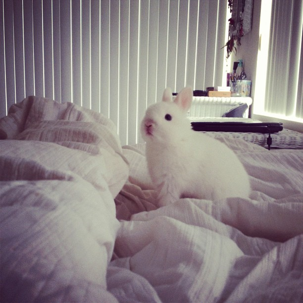 Fluffy Bunny Explores the Fluffy Bed