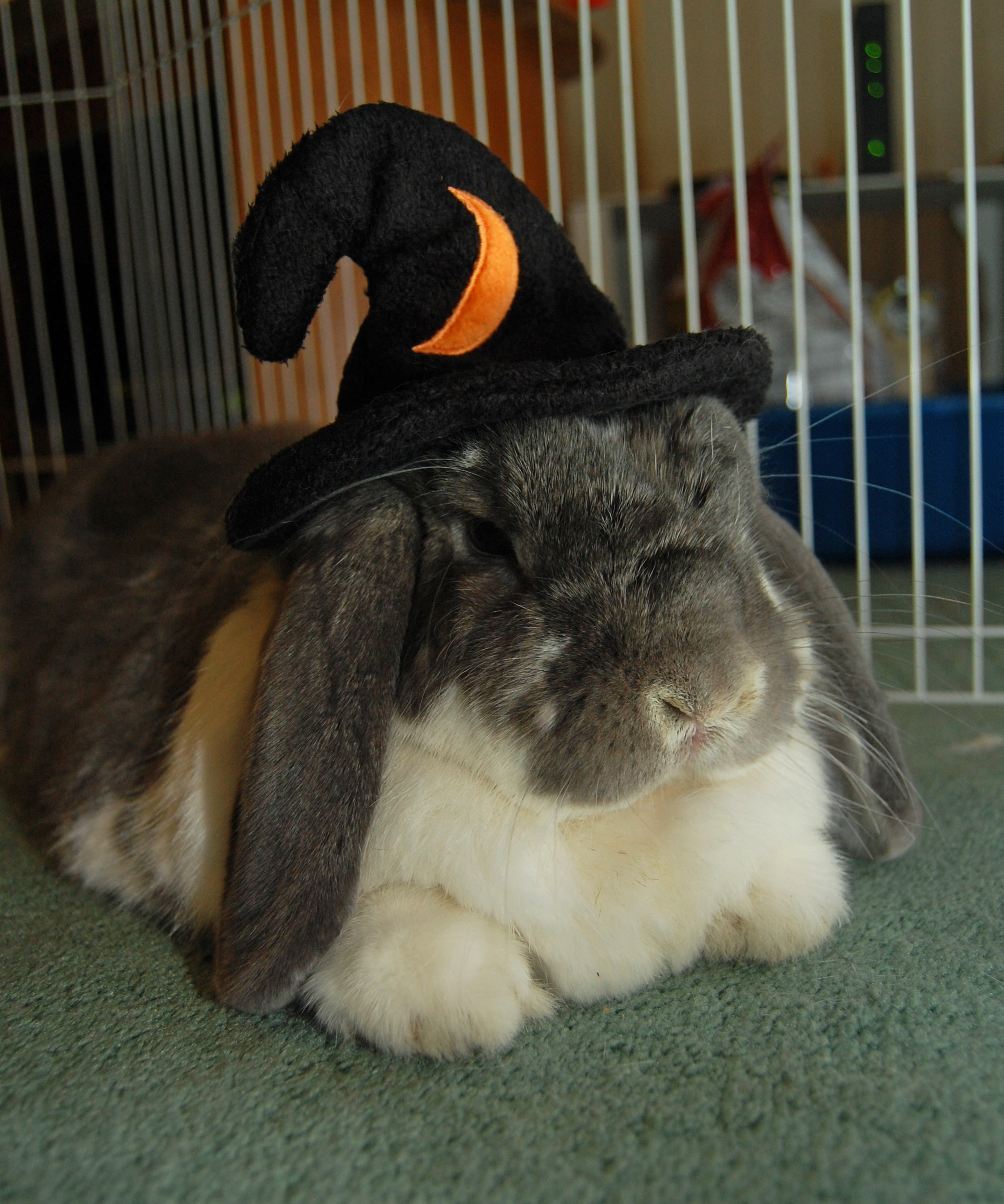 Bunny Is a Wizard for Halloween