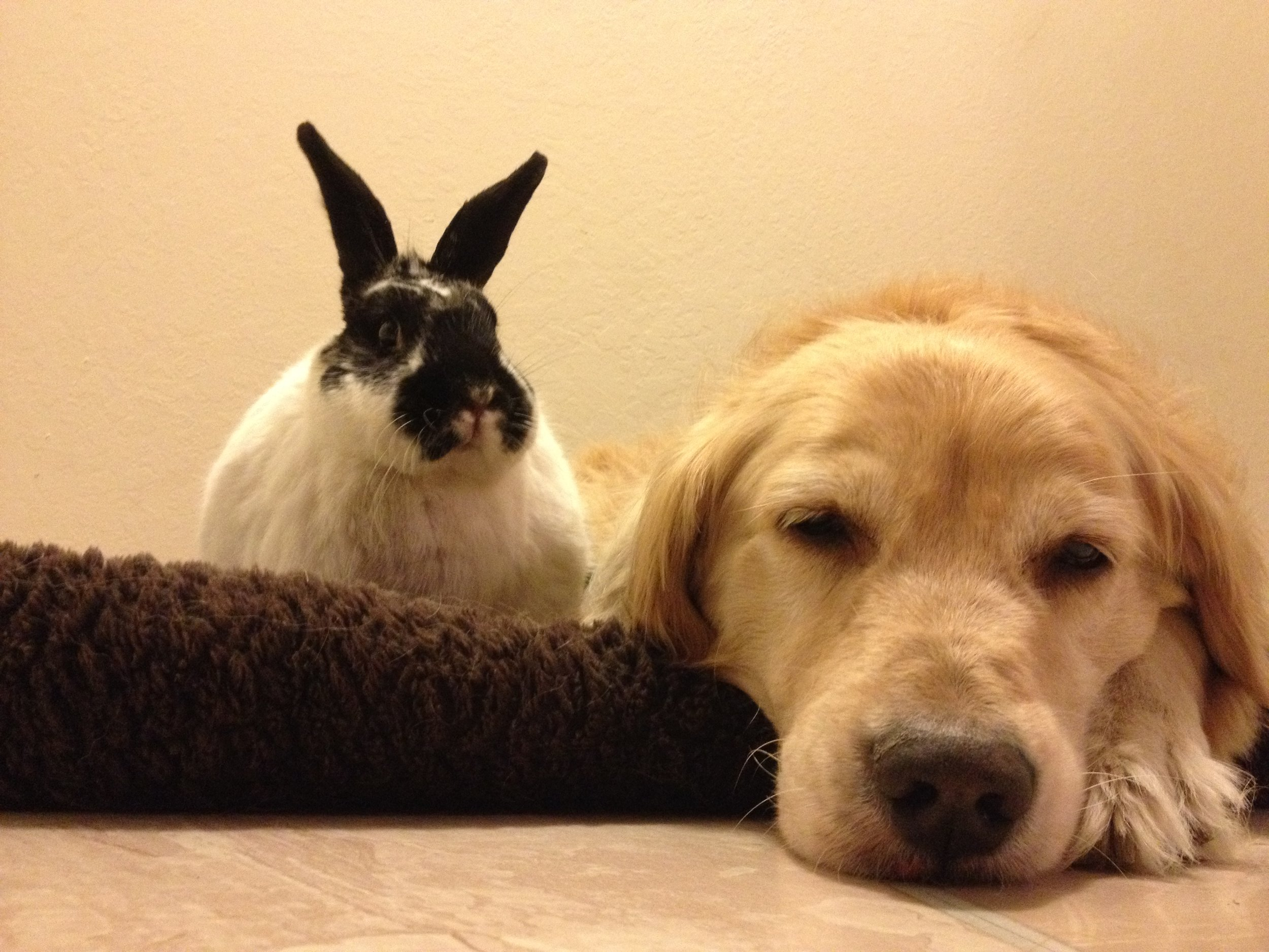 Security Bunny Stays Alert While Pup Sleeps
