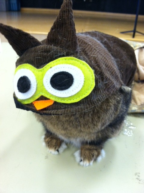 Bunny Is an Owl for Halloween 2