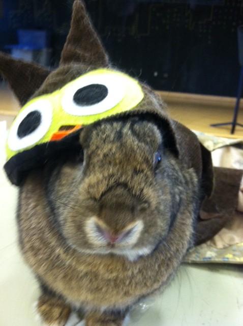 Bunny Is an Owl for Halloween 1