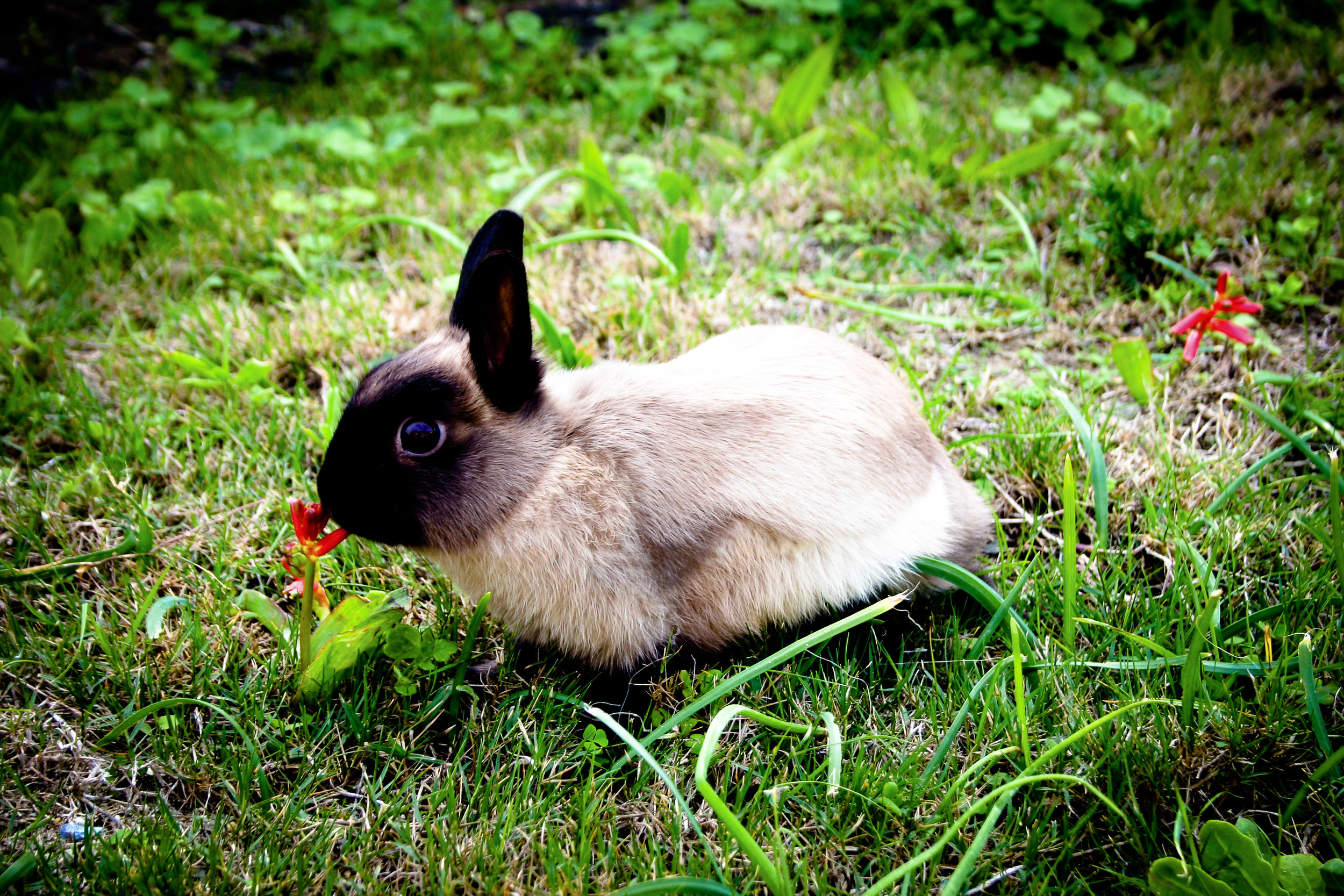 Bunny Stops to Smell the Flowers on an Outdoor Jaunt