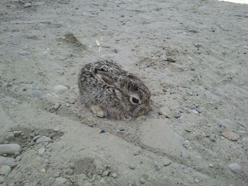 Wild Bunny Post 2
