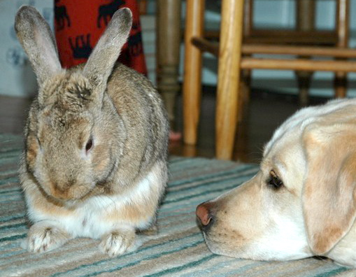 Bunny Gives His Dog Friend Face-Cleaning Lessons 3