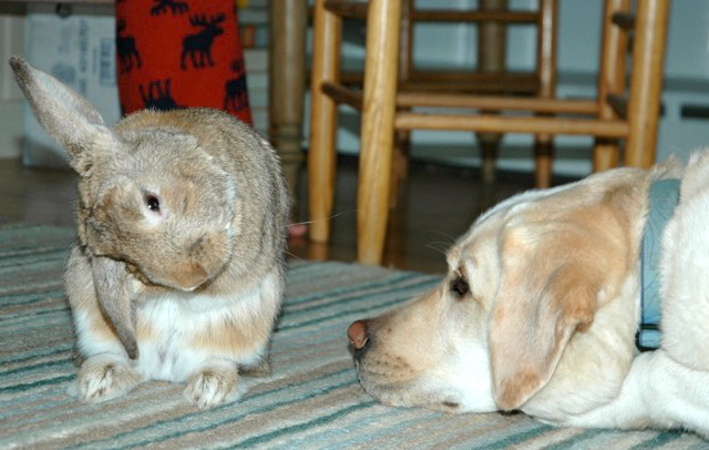 Bunny Gives His Dog Friend Face-Cleaning Lessons 2